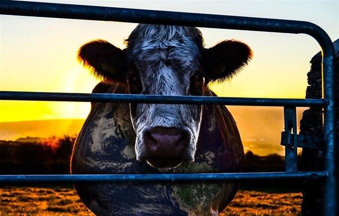 Vaca Veganismo